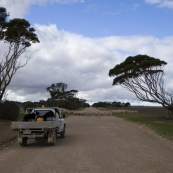 Ian Brown moving sheep between paddocks on Yorke Peninsula