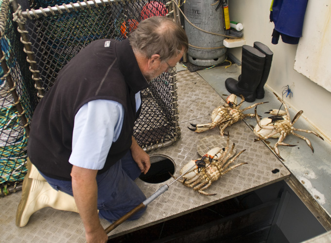 Rob pulling Giant Crab from Kingfisher\'s tanks