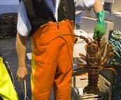 Rob displaying a three to four kilogram crayfish