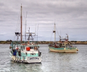 Crayfish boats in the Currie harbour