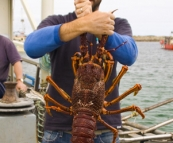 Sam holding a four kilogram crayfish