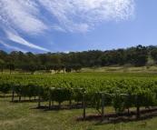 Freycinet Winery