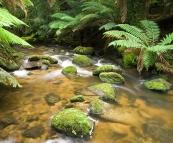 The creek near Saint Columba Falls