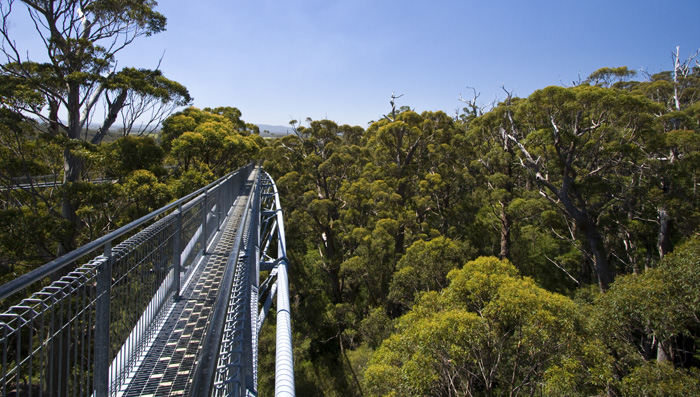 Valley of the Giants Treetop Walk