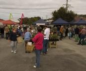 Albany Farmer's Market