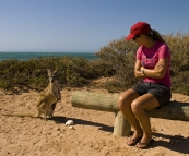 Lisa with an inquisitive mother and joey Wallaroo at our campsite at Osprey Bay