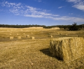 Hay bales on the drive south of New Norcia