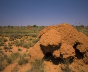 Back to the land of giant termite mounds...