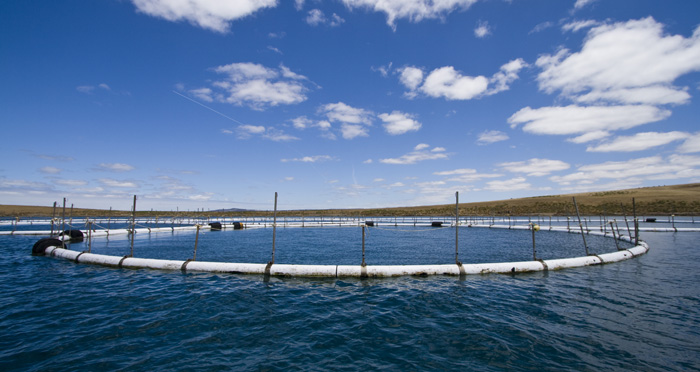 Tuna farm nets in Boston Bay
