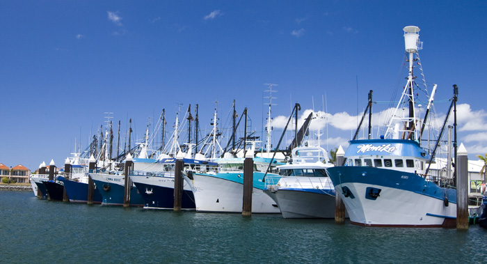 The prawn fleet dormant in Port Lincoln