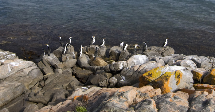 Cormorants on the rocks in Memory Cove