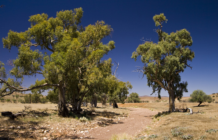Partacoona Station in the Flinders Ranges