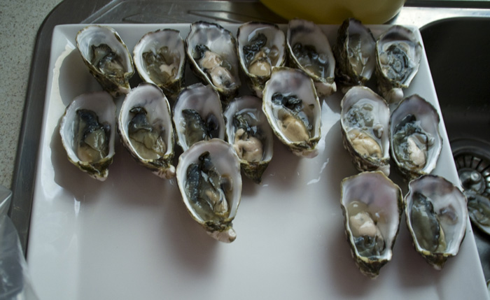 Oysters at the Browns\' farm