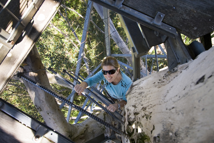Lisa climbing the Gloucester Tree in Gloucester National Park