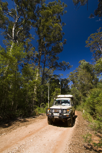 Driving through the Karri forests in Warren Naitonal Park