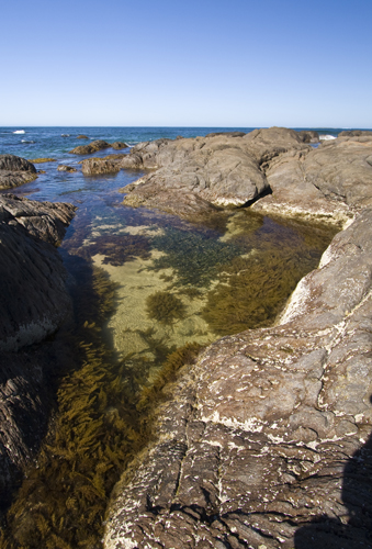 Tide pools at Windy Harbour