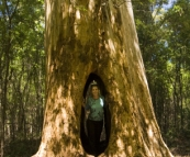 Lisa in the \'Walk Through Karri\' in Beedelup National Park
