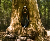 Sam in the \'Walk Through Karri\' in Beedelup National Park