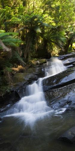 Triplet Falls in the Otway Ranges