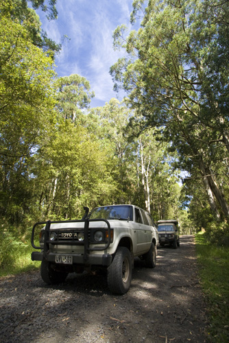 Bessie and The Tank cruising the Otway Ranges on the way to Lake Elizabeth