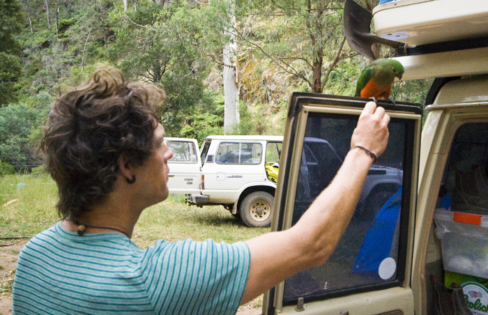 Chris hand-feeding a female Crimson Rosella at our campsite at Noonans Flat