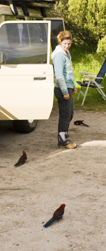 Lisa surrounded by friendly Crimson Rosellas at our campsite at Tidal River