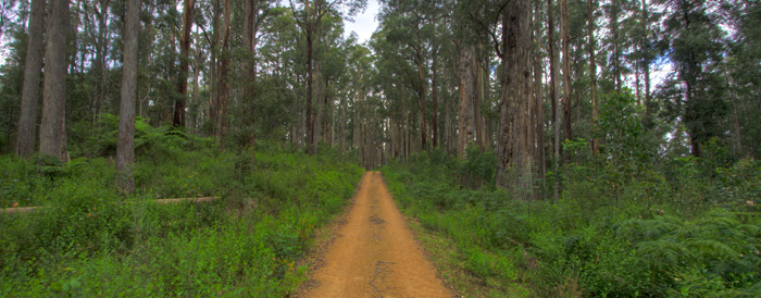 Yalmy Road along the edge of Snowy River National Park