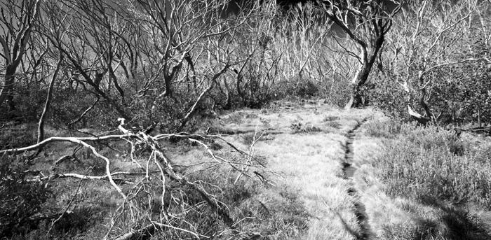 The trail to Dibbins Hut