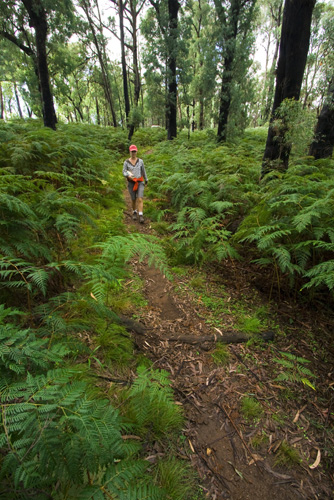 Lisa hiking to Rollasons Falls