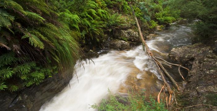 Buffalo Creek below Rollasons Falls