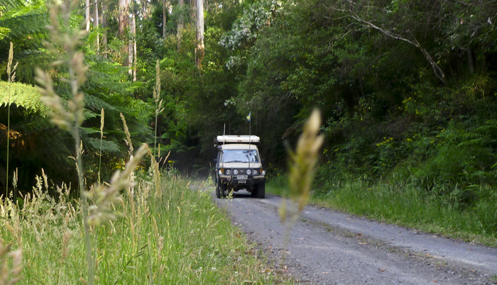 The Tank cruising the Otway Ranges