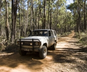 Bessie on one of the tracks through the dense forest by Strachans campground