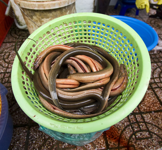 Fresh eels in Ben Tanh Market