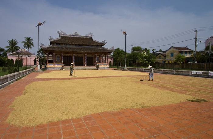 Rice farmers drying rice in front of the Confucius Temple