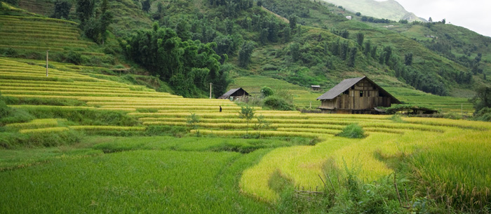 Rice paddies near Cat Cat Village