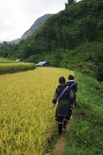 Walking through the rice paddies near Cat Cat Village