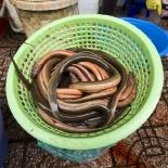 Fresh eels in Ben Tanh Market