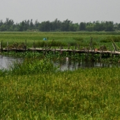 A fisherman on the edge of the rice paddies in the countryside north of Hoi An