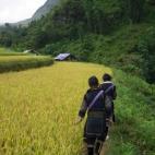 Walking through the rice paddies near Cat Cat Village