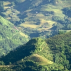 Rice paddies across the valley from Sapa