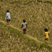Young children exploring the rice paddies near Ta Van Village