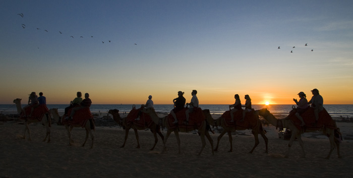 Sunset camel tours at Cable Beach