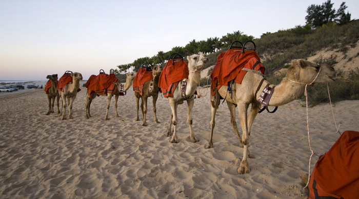 Camel tours on Cable Beach