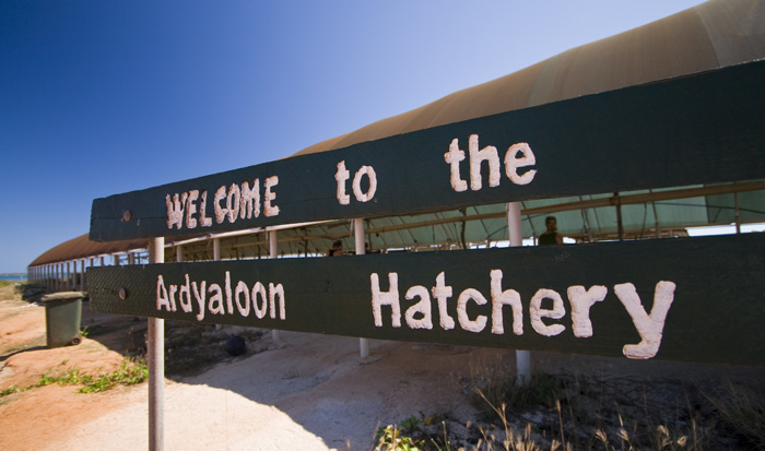 The hatchery at One Arm Point