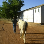 Greg walking his horse to the barn to saddle up