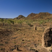 Termite mounds and the Osmand Range