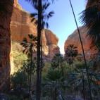 Mini Palms Gorge
