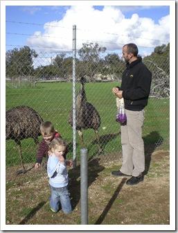 Sam, Max and Eleanor feeding the emus in Minlaton