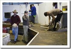 Ed Brown sorting the wool