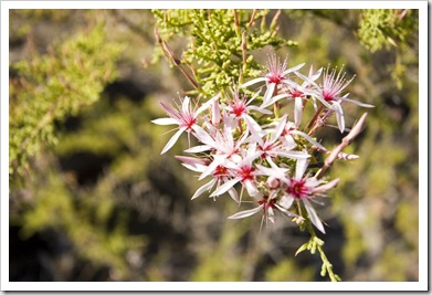 Wildflowers on the walk to Gubara Pools
